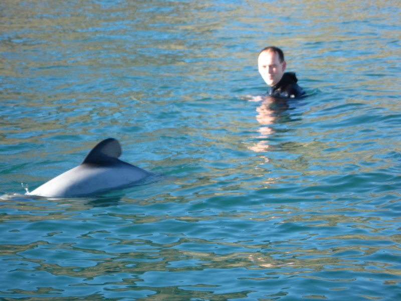Hector's Dolphins in Akaroa Harbour, New Zealand
