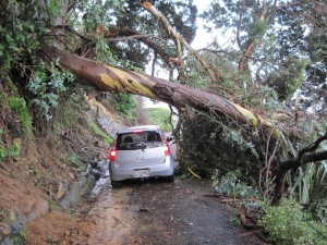 Our car barely fitting through fallen tree mess