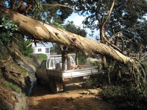 Farmer David cutting tree overhanging our driveway in Whakatete Bay, New Zealand