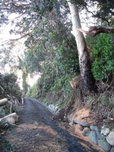 Our driveway in Whakatete Bay is finally cleared of the tree overhanging it.