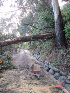 Our driveway in Whakatete Bay, New Zealand, cleared but for the largest tree