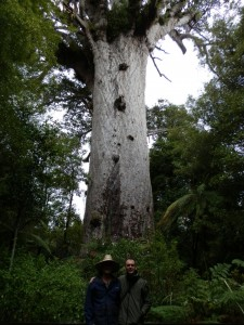 Lord of the Waipoua Forest, Tane Mahua, Northland, New Zealand