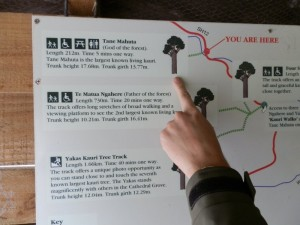 Track Map of Waipoua Forest Walks