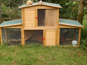 Chook house, Chicken House in New Zealand
