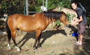 Andrew Wharton and Dave Clingman's adopted horse, Jorge, at the San Jose del Tajo RV motorhome park in Tlajomulco, Jalisco, Mexico, near Guadalajara